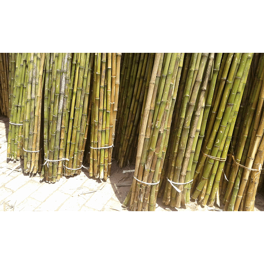 Bambú Colihue sin seleccionar, en bruto, largo 4 m. - Image 3