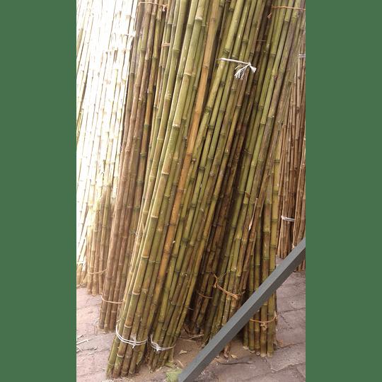 Bambú Colihue sin seleccionar, en bruto, largo 4 m. - Image 4