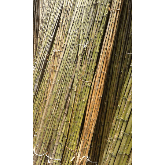 Bambú Colihue sin seleccionar, en bruto, largo 4 m. - Image 5
