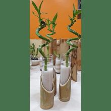 Bambú Lucky Arreglo 02
