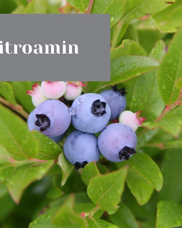 Nitroamine