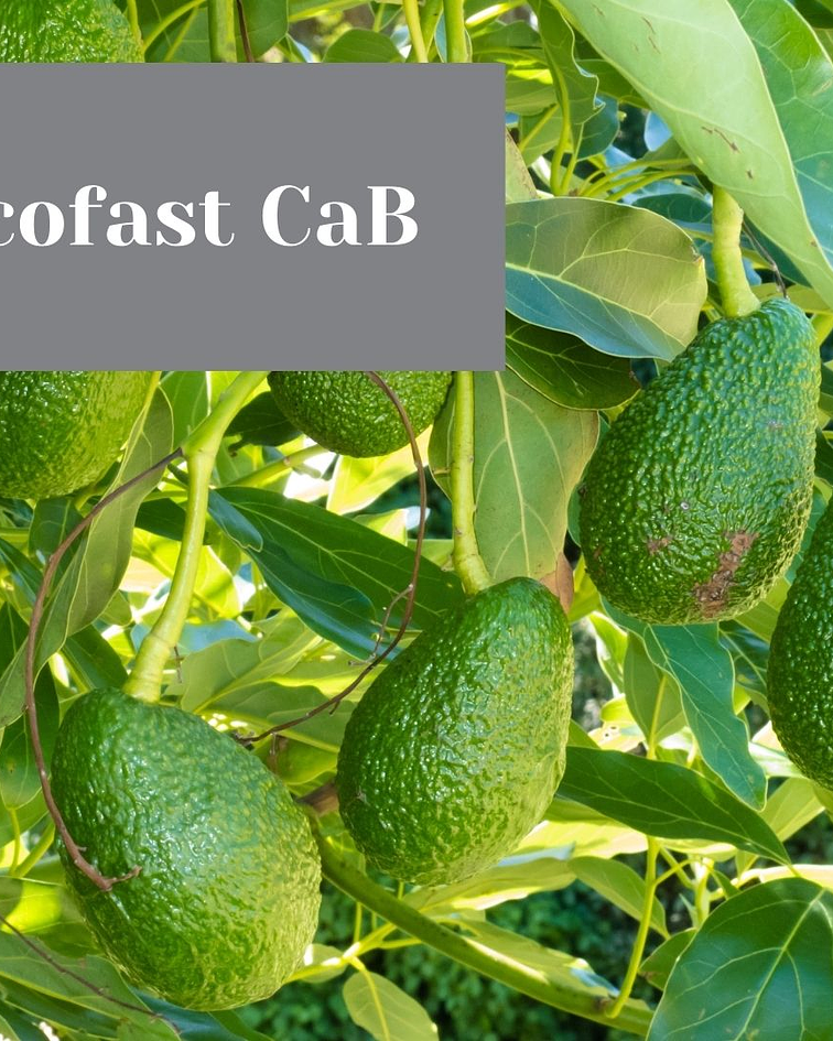 Ecofast CaB