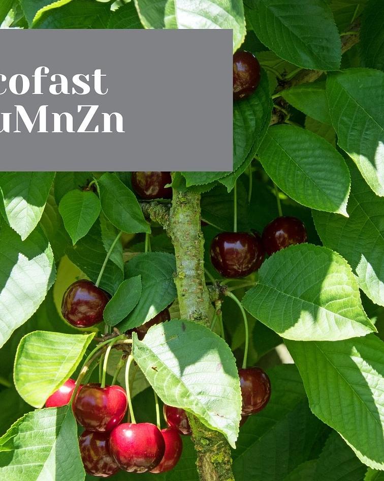 Ecofast CuMnZn