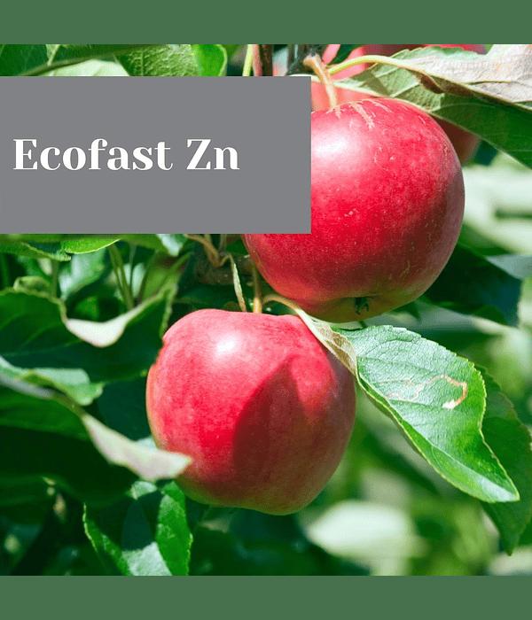 Ecofast Zn