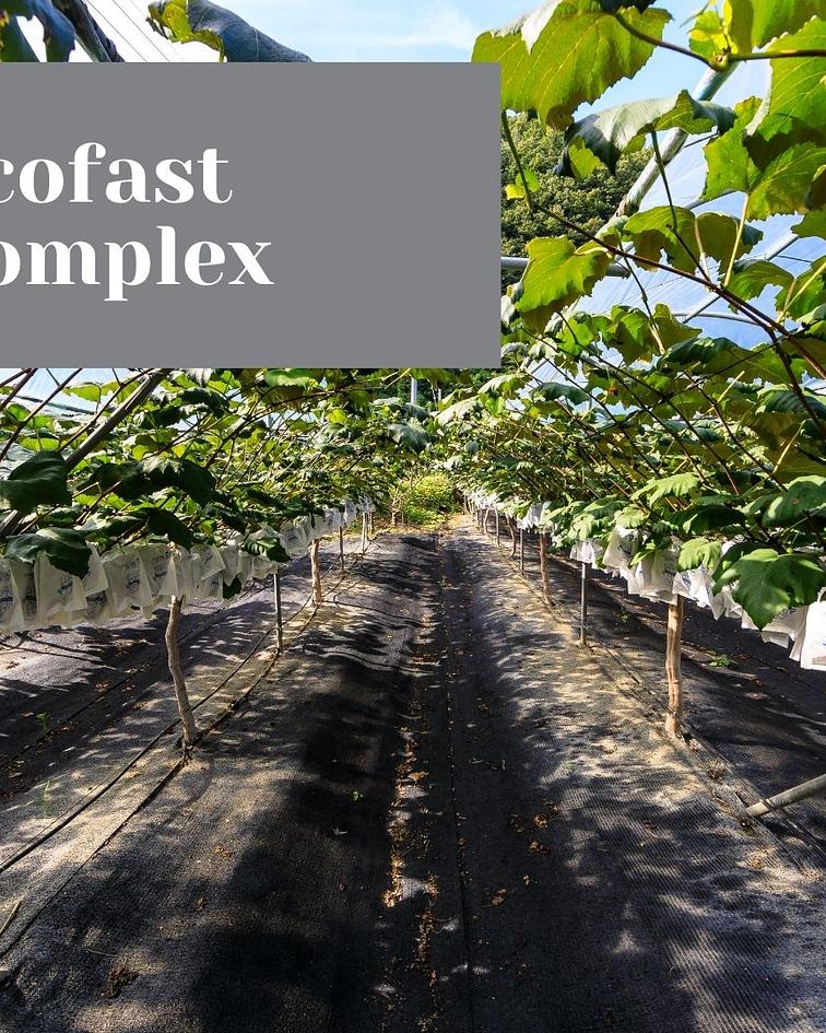 Complexo Ecofast