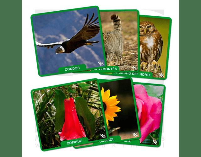 Láminas magnéticas Flora y Fauna Chile