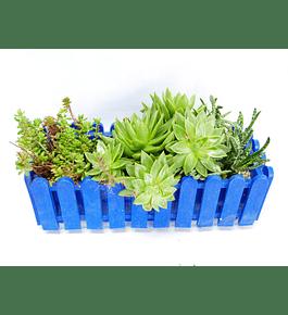 Jardinera de Suculentas