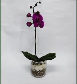 Orquídea en Florero de Vidrio