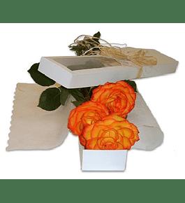 Caja 3 Rosas Ecuatorianas