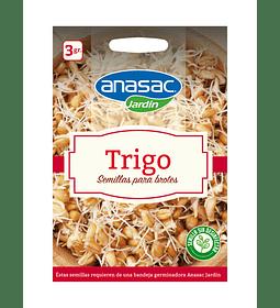 SEMILLA DE BROTES TRIGO (3 g)