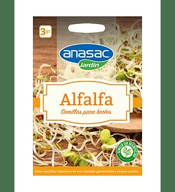 SEMILLA DE BROTES ALFALFA (3 g)