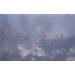Florencia Serrano - Pájaros