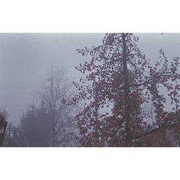 Florencia Serrano - Niebla