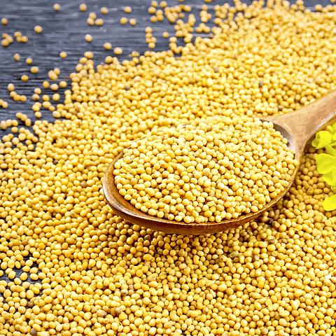 Semilla de Mostaza Amarilla