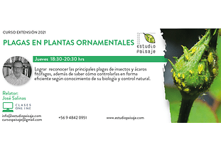 CURSO PLAGAS EN PLANTAS ORNAMENTALES