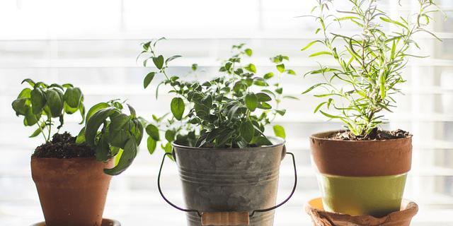 5 claves para cultivar vegetales en macetas