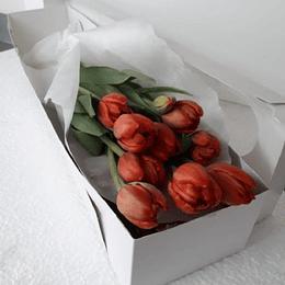 Caja 10 Tulipanes