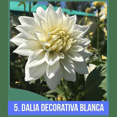 DALIA # 5 - DECORATIVA BLANCA (grande)