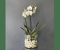 Orquidea Flora