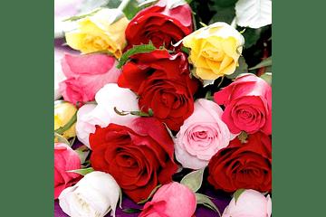 El significado de las rosas según su color.