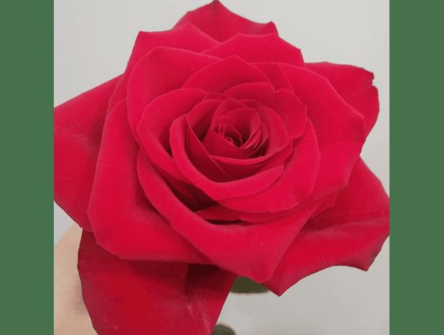 Ramo de Rosas Mix Elements