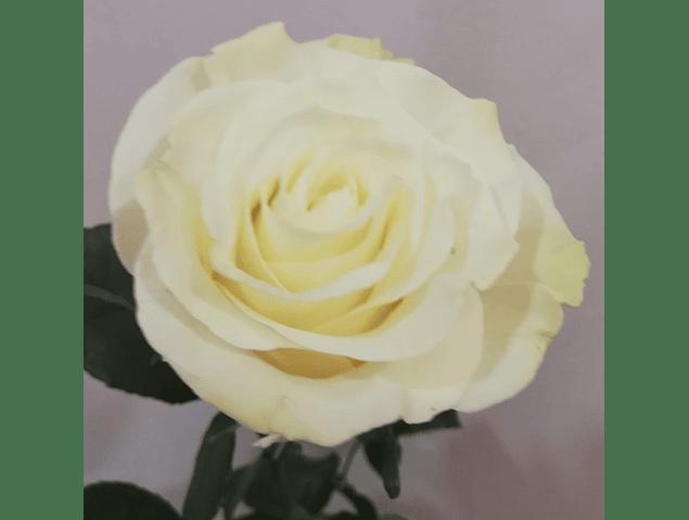 Ramo de Rosas Lago