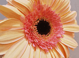 Coroa de Flores Campestre