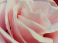 Coração de Rosas Brancas e Cor-de-Rosa