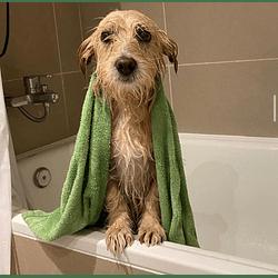 Baño sanitario