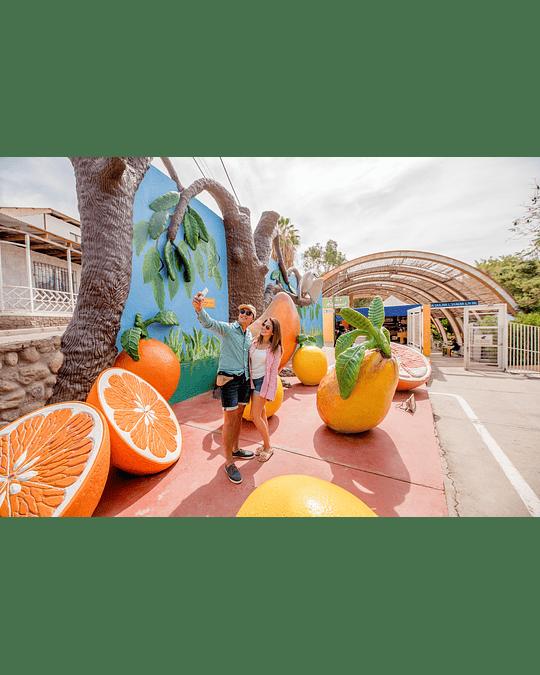 Tour Oficinas Salitreras y Oasis de Pica