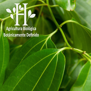 Ravintsara Bio Aceite Esencial 5 ml