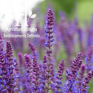 Salvia Sclarea Bio Aceite Esencial 5 ml