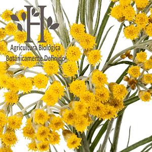 Siempre Viva Amarilla Bio Aceite Esencial 5 ml