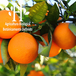 Naranja Dulce Bio Aceite Esencial 5 ml