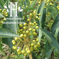 Verbena  Exotica Bio Aceite Esencial 5 ml