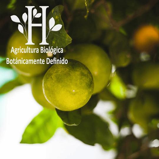 Mandarina Verde Bio Aceite Esencial 5 ml