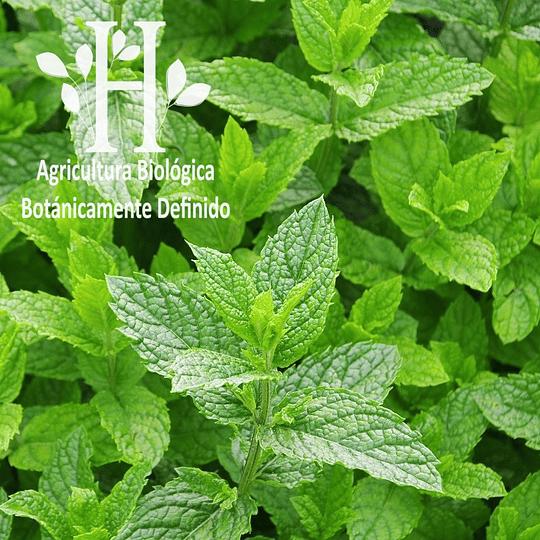 Menta Piperita Bio Aceite Esencial 5 ml