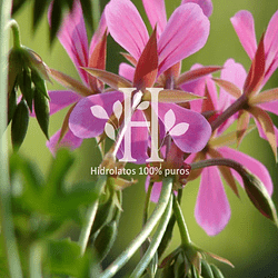 Hidrolato de Geranio 500 ml