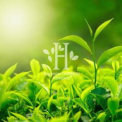 Té Verde Fragancia 40 ml