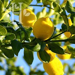 Limón Aceite Esencial 100 ml