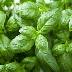 Albahaca Bio Aceite Esencial 15 ml