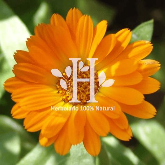 Calendula Extracto HG 100 ml - Image 2