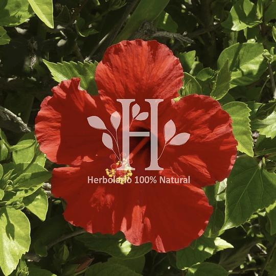 Hibisco Extracto HG 30 ml