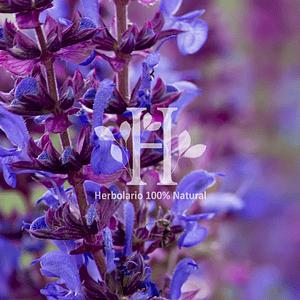 Salvia Extracto HG 100 ml