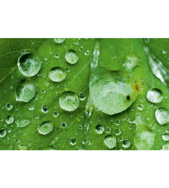 Leica APO-Macro-Elmarit-TL 60mm f/2.8 ASPH. (Black)