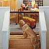 Malla Protectora Para Mascotas