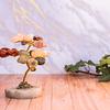 Árbol de los 7 Chacras