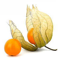 Physalis semillas