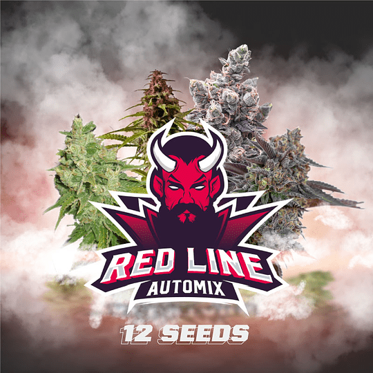 Red Line Automix x12 BSF SEEDS
