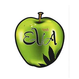 Jamaican Dream Fem CBD 3+1 Eva Seeds